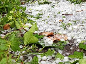 Hagelkörner mit abgerissenen Pflanzen