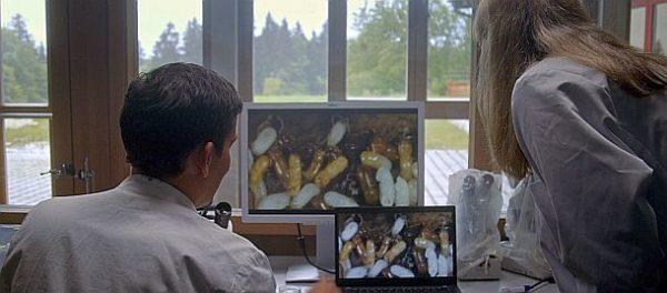 Der wilde Wald: Ambrosiakäfer im Riesenformat (c) Lisa Eder Film