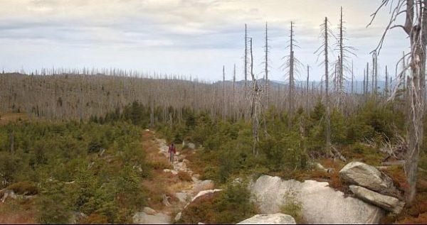 Der wilde Wald: abgestorbene Bäume (c) Lisa Eder Film