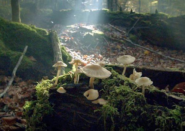 Der wilde Wald: Pilze im Wald (c) Lisa Eder Film