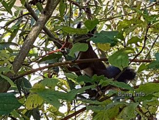 Eichhörnchen im Baum