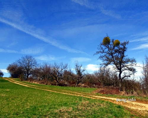 Landschaft, Baum mit Mispel, blauer Himmel
