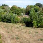 Landschaft mit trockenen Wiesen und Wald