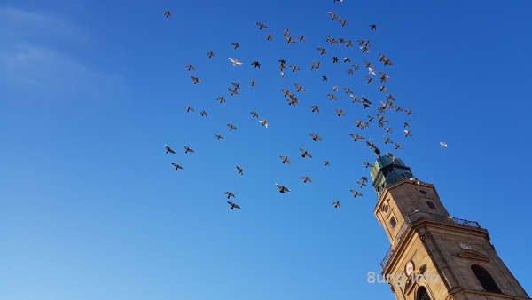 Taubenschar am blauen Himmel