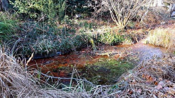 zugefrorener Teich mit Raureif am Ufer