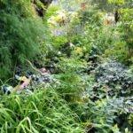 Schattengarten mit verschiedenfarbenen grünen Blattstauden