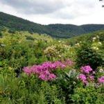 Blick aus dem Garten auf die Schwäbische Alb