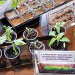 garten wie pflanzen selbst vorziehen?