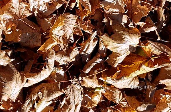 Braunes Herbstlaub, trockene Blätter