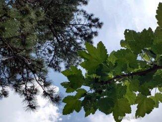 Himmel durch die Bäume gesehen