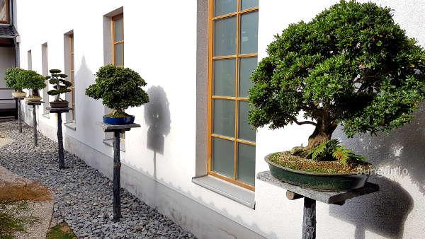 Bonsais im Japangarten von Bad Langensalza