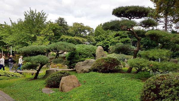 Große Bonsais im Japangarten von Bad Langensalza