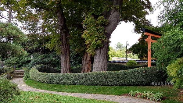 Wellenförmige Hecke umrahmt eine Baumgruppe im JapangartenHecke