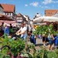 Wochenmarkt in Kirchheim