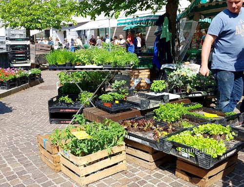 Jungpflanzen auf dem Markt