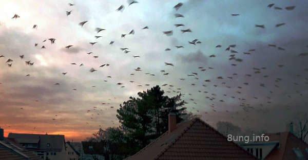 Vögel sammeln sich zum Abflug nach Süden