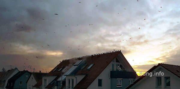 Vögel in der Dämmerung auf dem Dachfirst